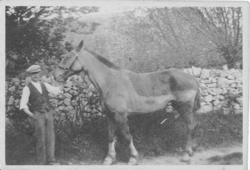 tony-prenderville-horse